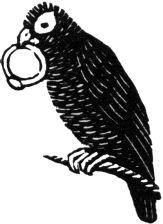 Parrot (giclée only)